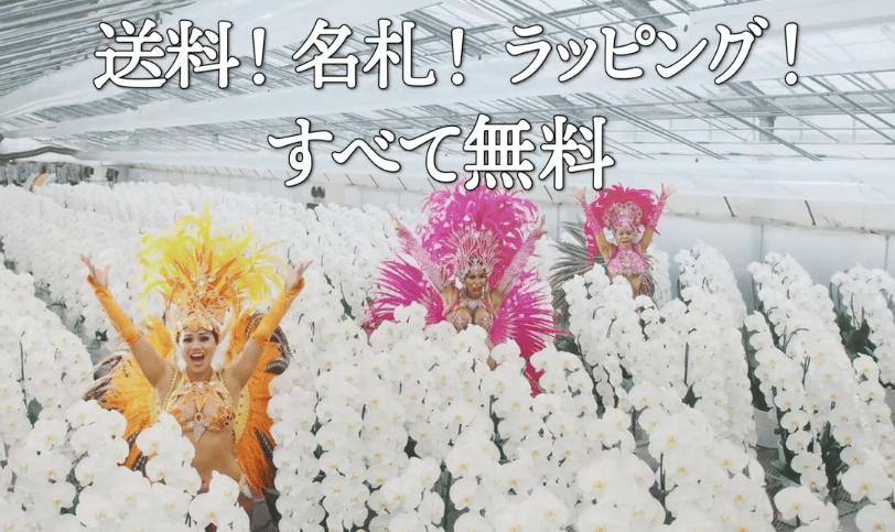 「ビジネスフラワー」TV-CM胡蝶蘭篇