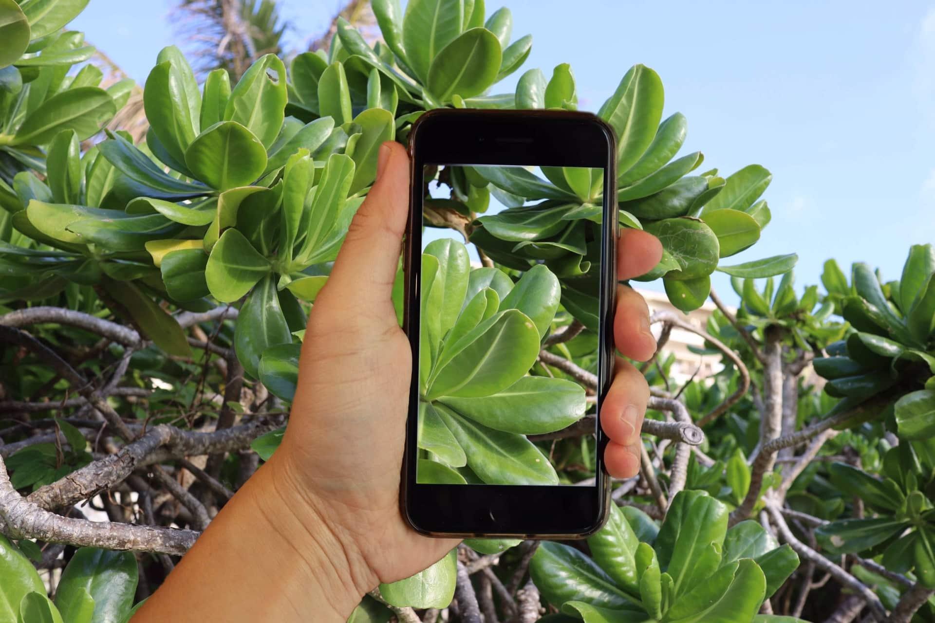【徹底解説】iPhoneの動画をトリミングする方法とおすすめアプリ